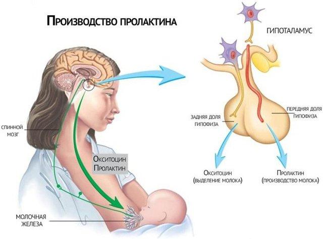 Анализ на гормон кортизол: на какой день цикла и как подготовиться