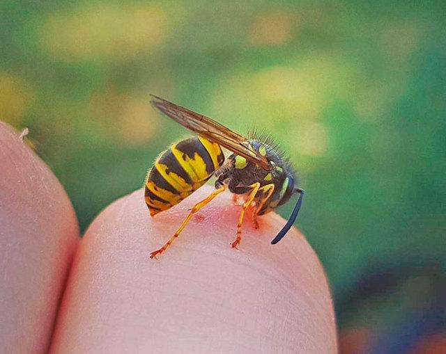 Первая помощь при укусе осы: основные действия в домашних условиях
