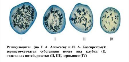 Ретикулоциты: что это, их норма, причины повышения или понижения