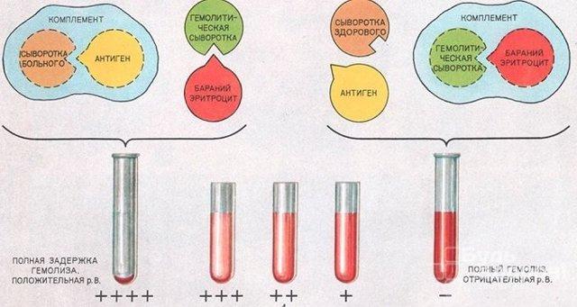 rw анализ крови что это такое и как он расшифровывается