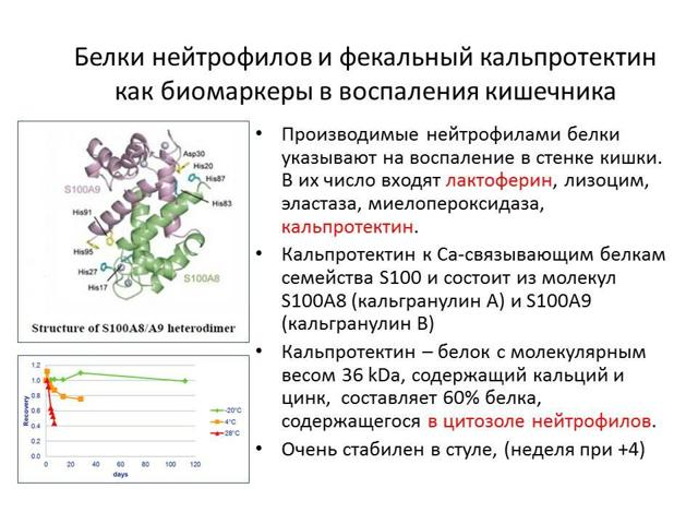 Фекальный кальпротектин: что показывает положительная реакция на белок в кале