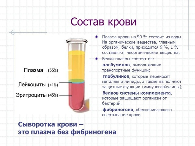 Сыворотка крови человека: что это такое и как ее получить
