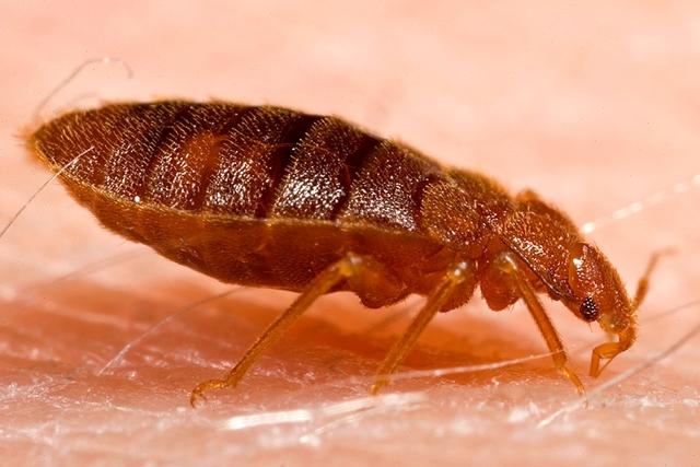 Чем грозит укус насекомого? Возможные последствия