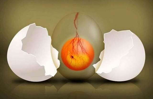 ХГЧ при замершей беременности на ранних сроках, анэмбрионии