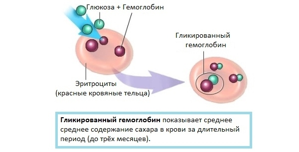 Норма гемоглобина у женщин (таблица по возрасту)