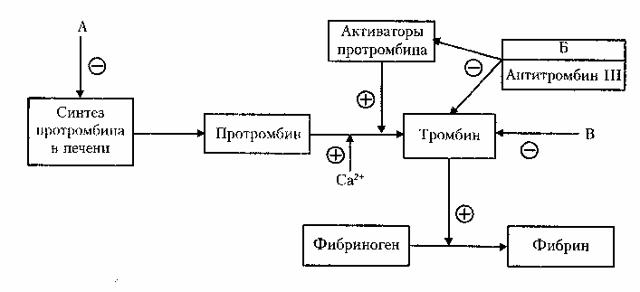 Анализ на фибриноген при беременности