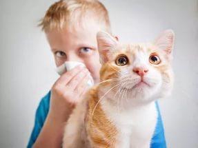 Аллергия на кошек: симптомы проявления и возможные причины