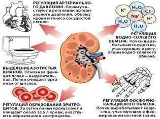 Гломерулонефрит у детей: симптомы и лечение, опасность острового заболевания, протекание при беременности, клинические рекомендации, соблюдение диеты