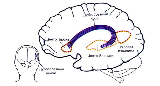 Ишемический инсульт левой стороны: сколько живут, последствия, реабилитация, прогноз для жизни