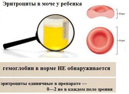 Что такое эритроциты крови: где образуются, продолжительность жизни и функции