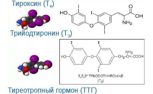 Антитела к рецепторам ТТГ: что это? норма, повышенные и отрицательные
